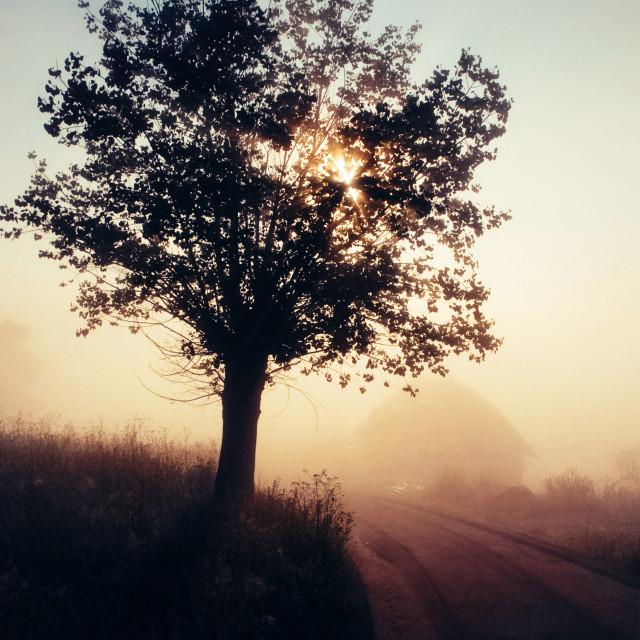 """Village road fresh misty moment"" stock image"