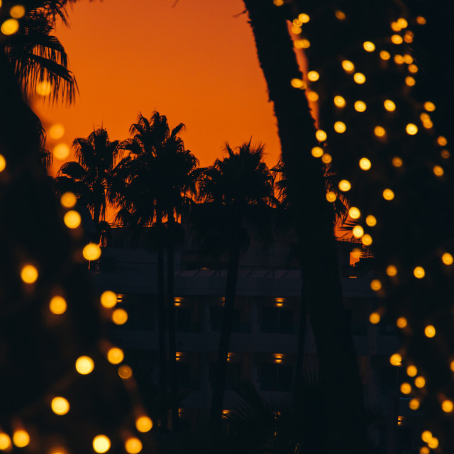 """""""Palm trees silhouette and light bulbs summer moment"""" stock image"""