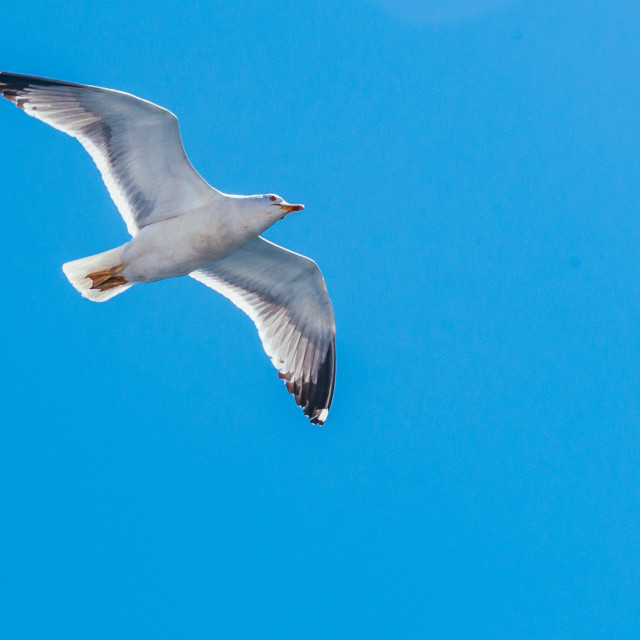 """""""A seagull flies in the sky"""" stock image"""