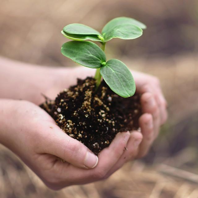 """Planting"" stock image"