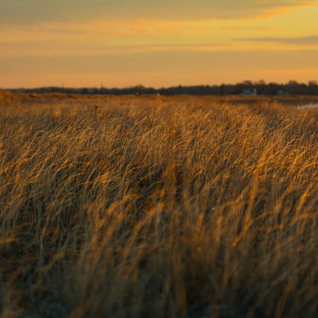 """Sunshine on Coastal Grasslands"" stock image"