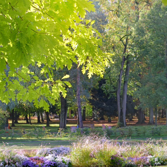 """""""view on green foliage of trees and flowers in a public park"""" stock image"""