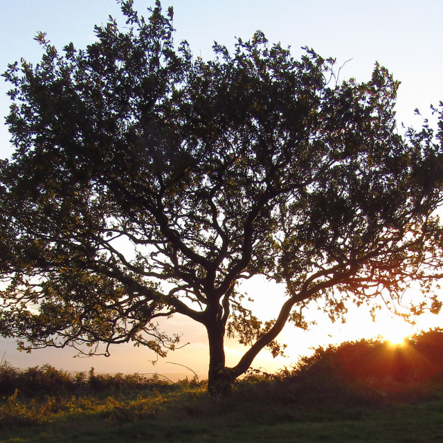 """Tree at top of Quantocks at sunset"" stock image"