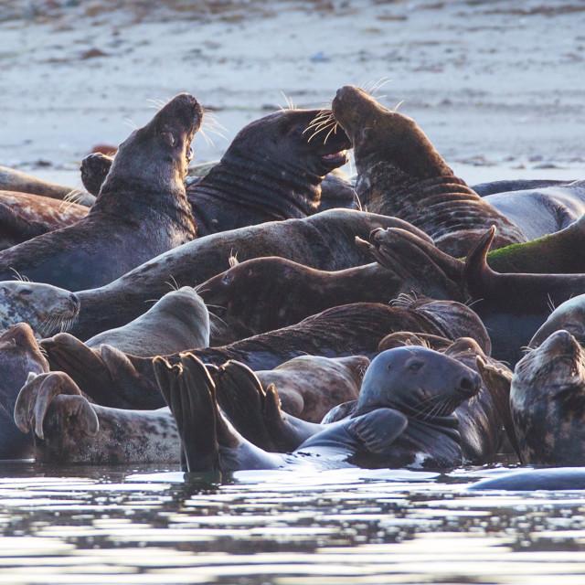 """""""Cape Cod seals"""" stock image"""