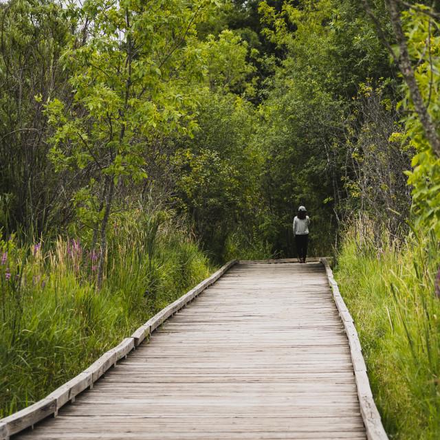 """""""woman walking on a park boardwalk in a wetland"""" stock image"""