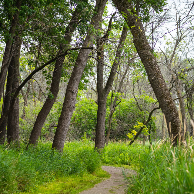 """""""path in a forested park"""" stock image"""