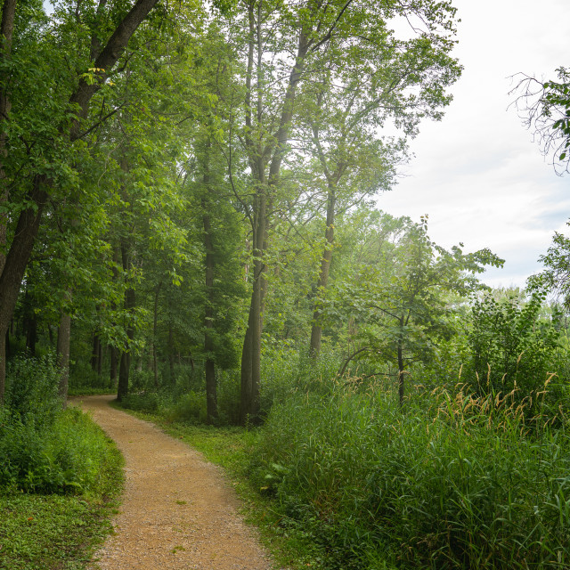 """""""foggy maintained park trail next to a lake in minnesota"""" stock image"""