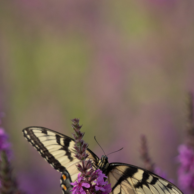 """""""macro image of a butterfly on a flower"""" stock image"""