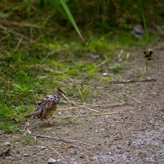 """""""bird on a trail inquisitively looking back at camera"""" stock image"""