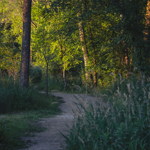 """""""a bend in the wooded dirt path"""" stock image"""