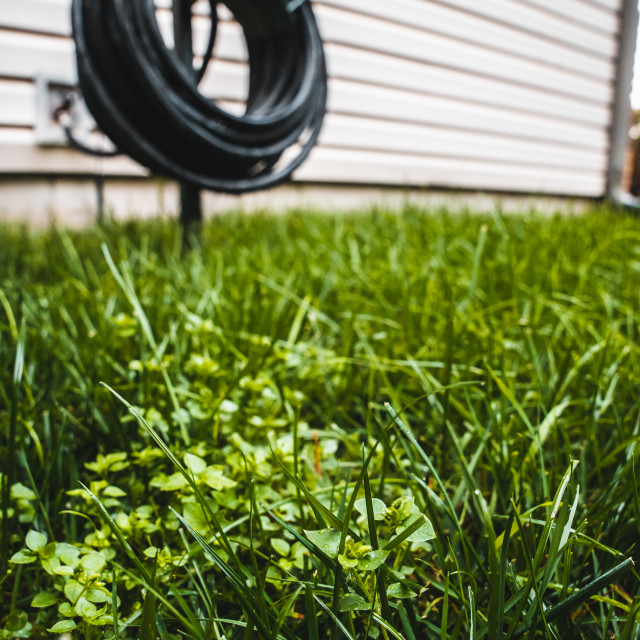 """""""grass and hose in the backyard garden"""" stock image"""