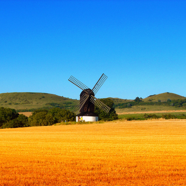 """""""Pitstone Windmill in Corn Field - Buckinghamshire Landscape"""" stock image"""