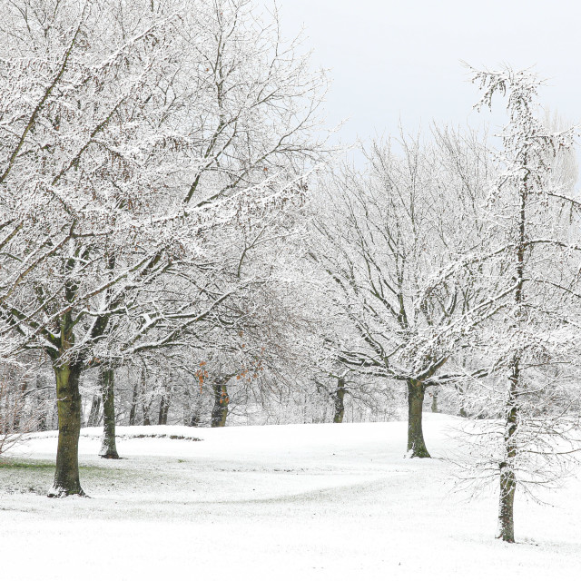 """Snow covered landscape"" stock image"