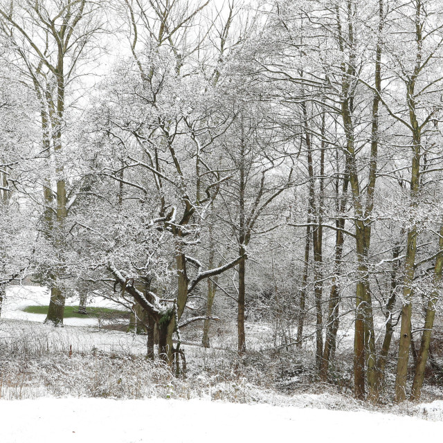 """Snowy trees in the landscape"" stock image"