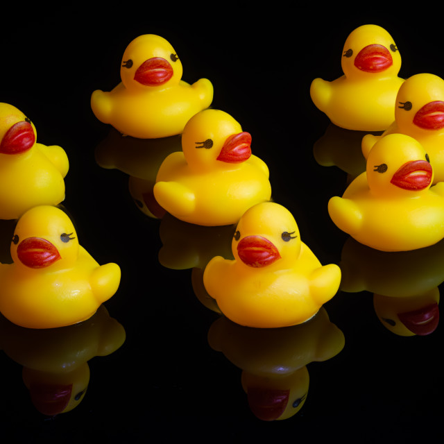 """""""not quite swimming in a row"""" stock image"""