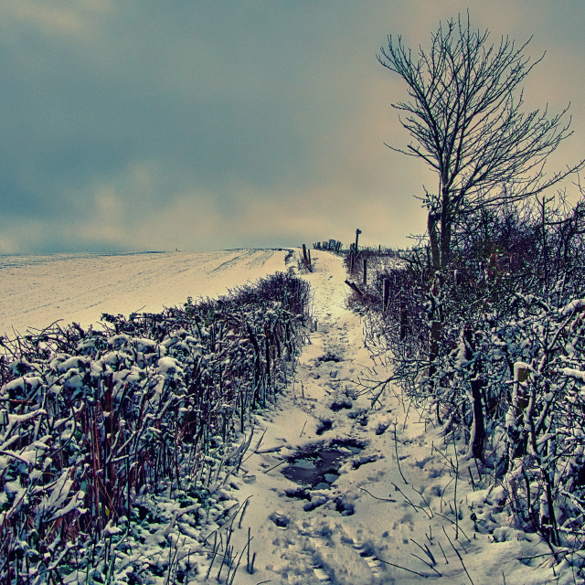 """""""Snow Covered Byway - Nine Hills, Devizes, Wiltshire, England"""" stock image"""