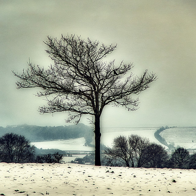 """""""The Lone Tree - Potterne Field, Devizes, Wiltshire, England"""" stock image"""