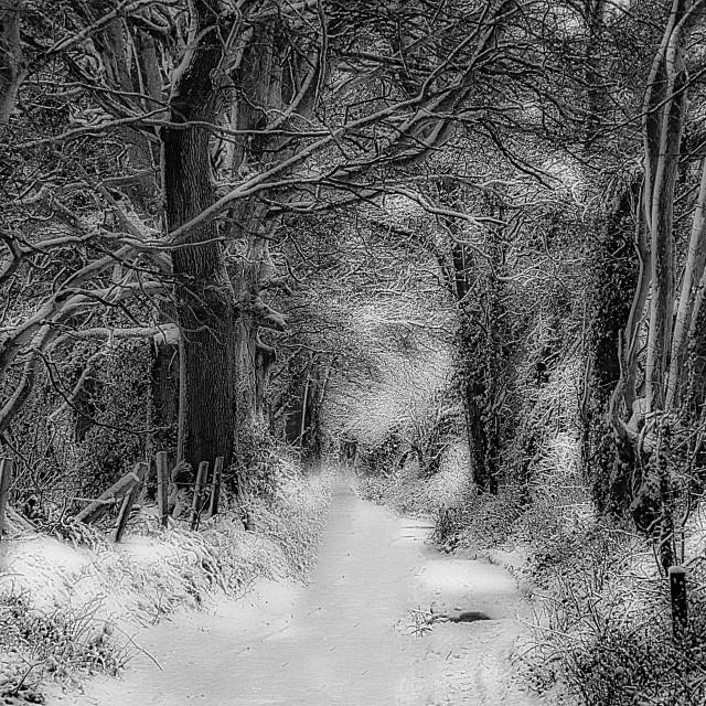 """Grubbe's Wood Bridleway - Devizes, Wiltshire, England"" stock image"