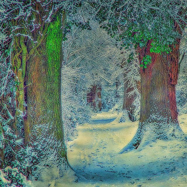 """Path Through Drews Pond Woods - Devizes, Wiltshire, England"" stock image"