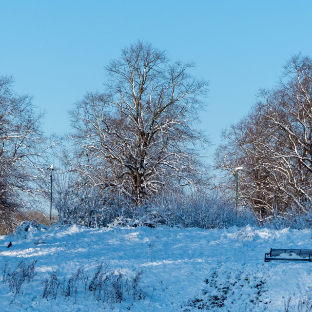 """""""Trees on a snowy day in Nottingham"""" stock image"""