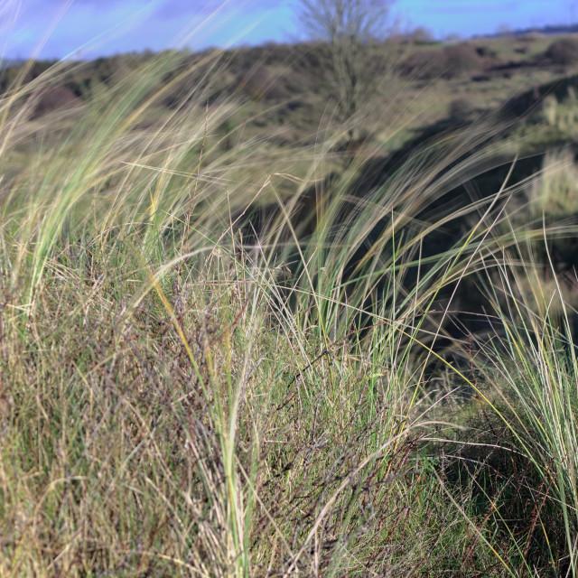 """Blurred Grass"" stock image"