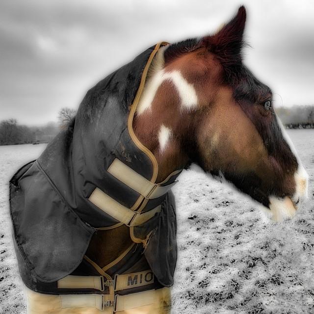 """Friendly Horse"" stock image"
