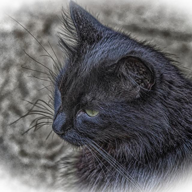 """""""Black Cat - Reggie"""" stock image"""