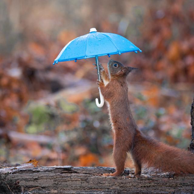 """Under My Umbrella"" stock image"