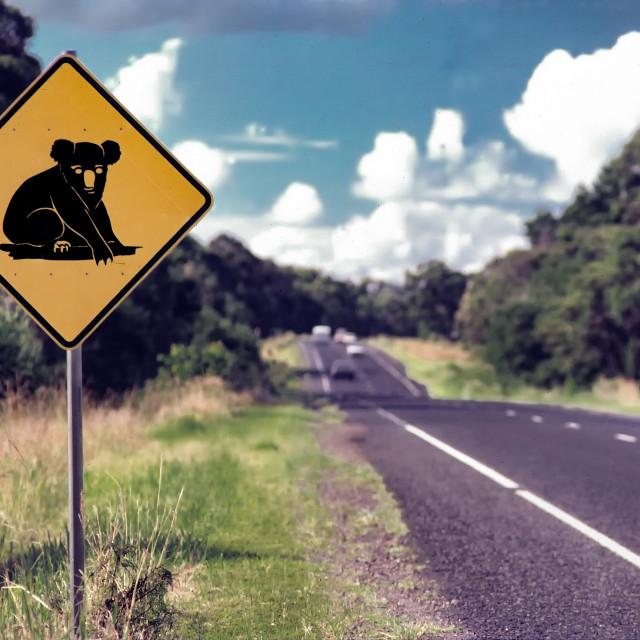 """Koala Country"" stock image"