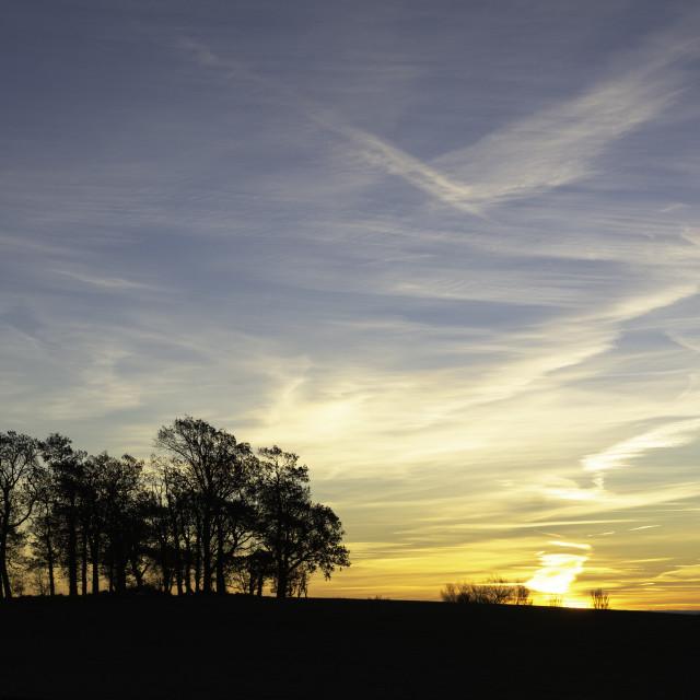 """""""Sunrise and woodland copse"""" stock image"""