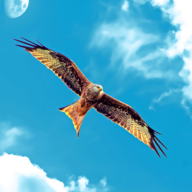 """""""Red Kite with Moon Digital Oil"""" stock image"""