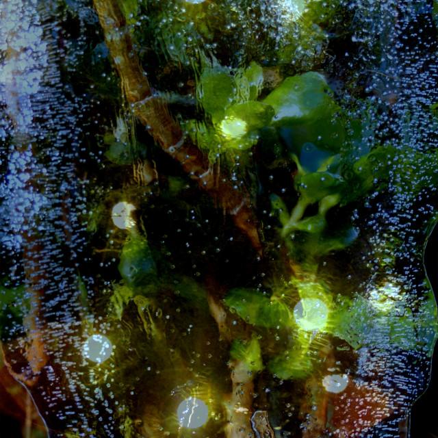 """Blue ice & green lights"" stock image"