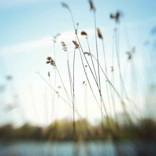 """""""Botanical / Lakeside"""" stock image"""