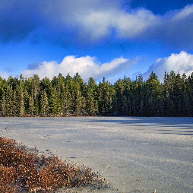 """""""Frozen lake and evergreen forest"""" stock image"""