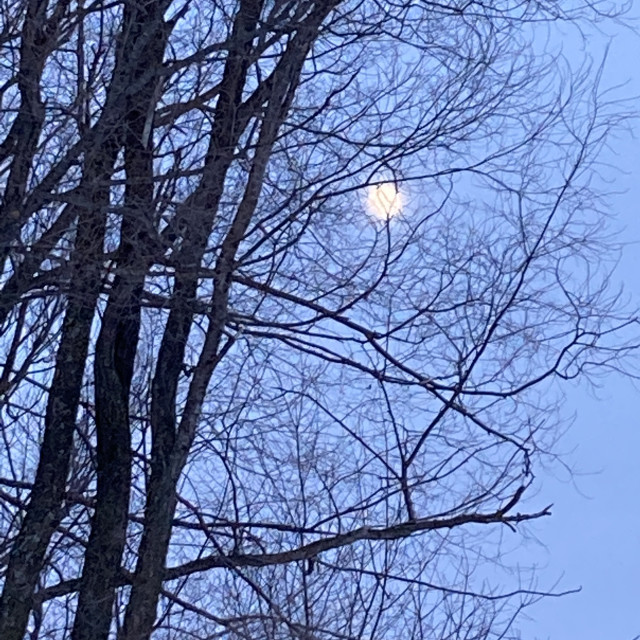 """""""Moon in the branches"""" stock image"""