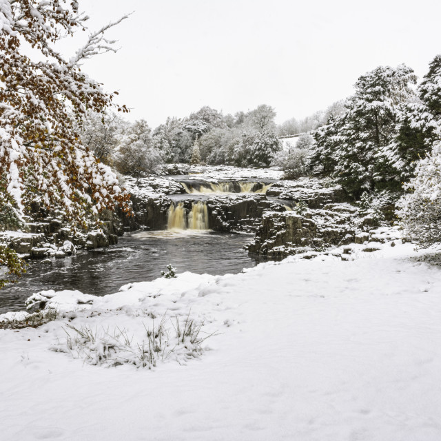 """""""Low Force in snow"""" stock image"""