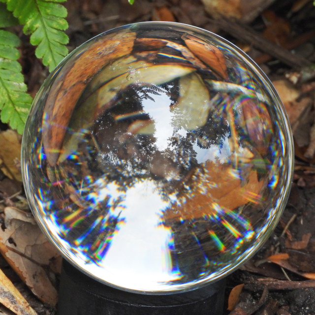 """""""Crystal Ball among Leaves and Ferns"""" stock image"""