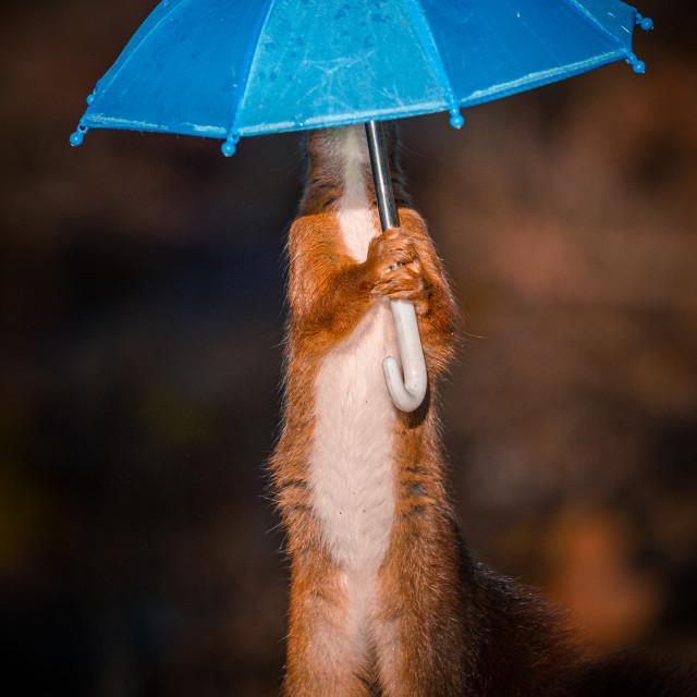 """Umbrella Man 2"" stock image"