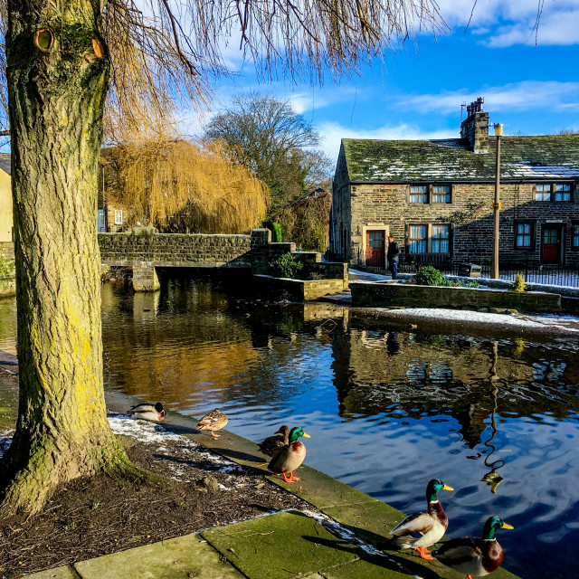 """""""The Beck, Silsden (Cobbydale) Ducks contemplating a paddle."""" stock image"""
