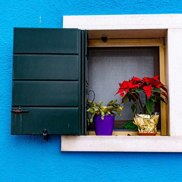"""""""Flowers in the Window"""" stock image"""