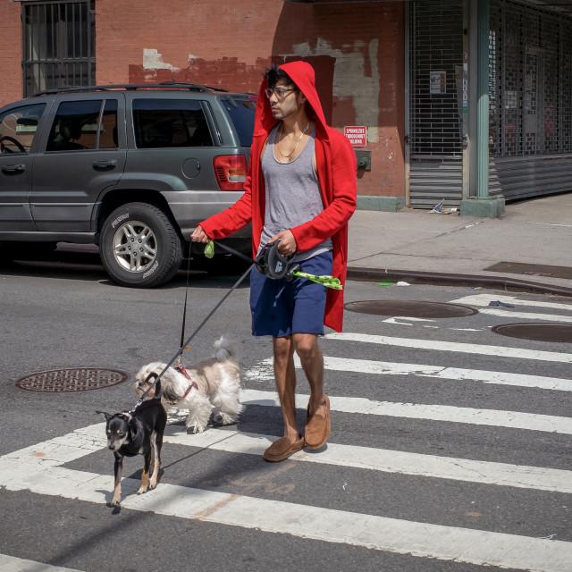 """Harlem Cross Walk"" stock image"