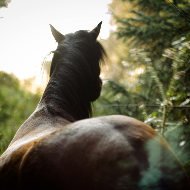 """""""Horse in the wild"""" stock image"""