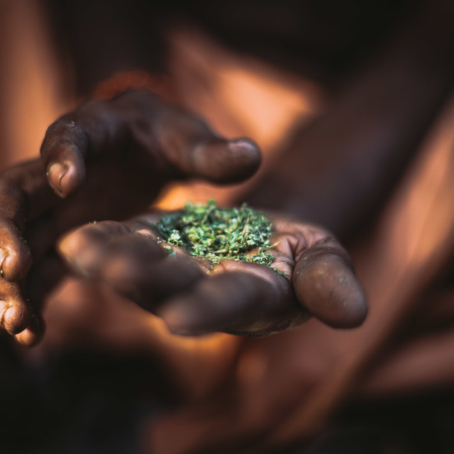 """""""Ritual Preparation of Cannabis in India"""" stock image"""