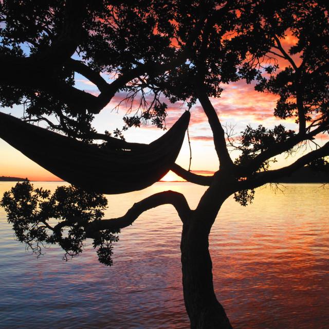 """Hammock in Tree over water"" stock image"