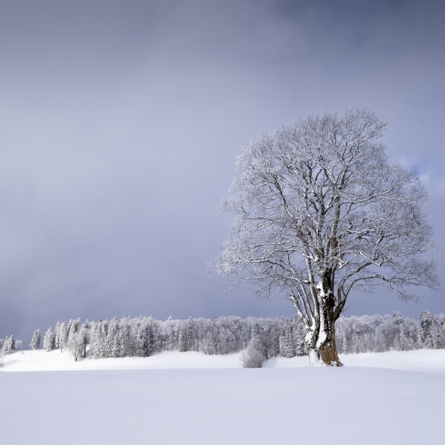 """Winter lights"" stock image"