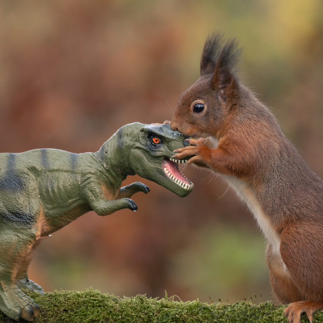 """Dinosaur VS Red Squirrel"" stock image"