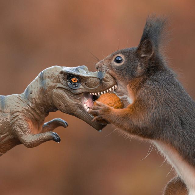 """Dinosaur VS Red Squirrel round 2"" stock image"