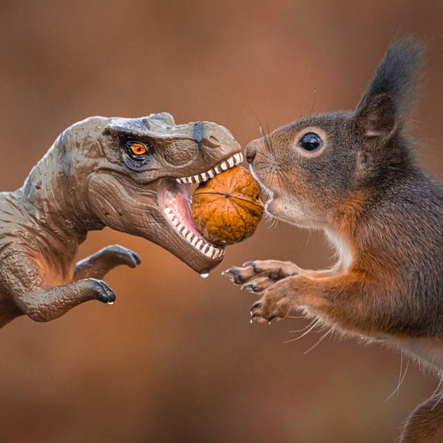 """Dinosaur VS Red Squirrel Round 3"" stock image"