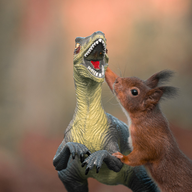 """Dinosaur VS Red Squirrel Round 4"" stock image"