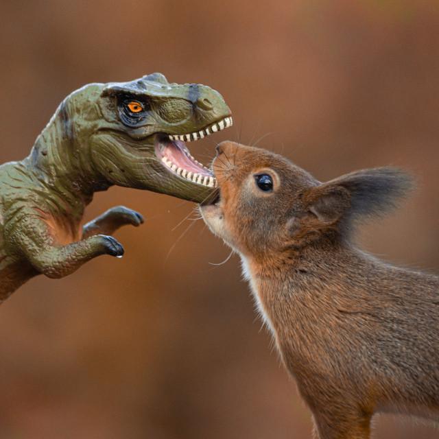 """Dinosaur VS Red Squirrel Round 6"" stock image"
